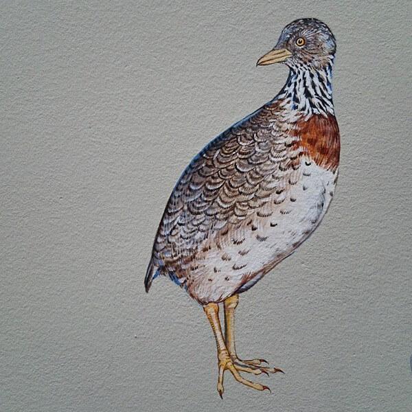 birds painting 17