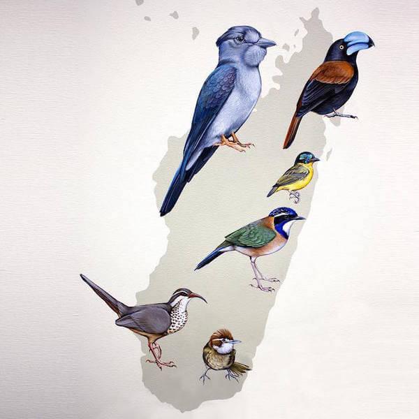 Modern Bird Families Giant Mural 21