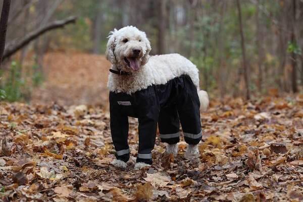 dog pants 1