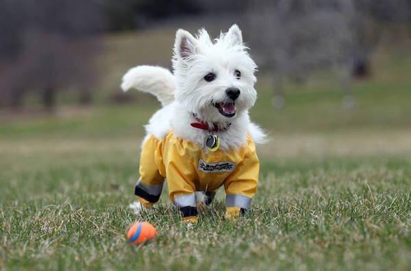 dog pants 2