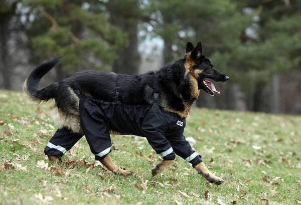 dogs pants 4