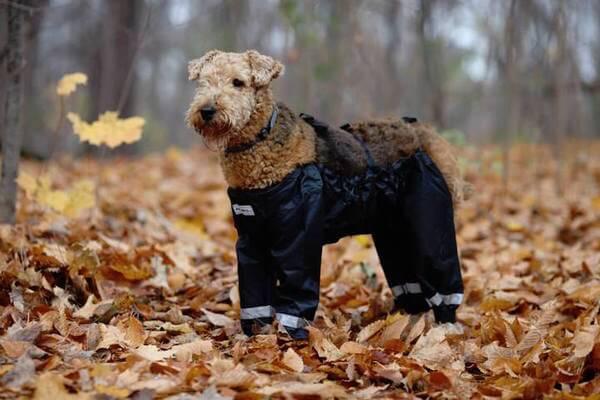 dog pants 7