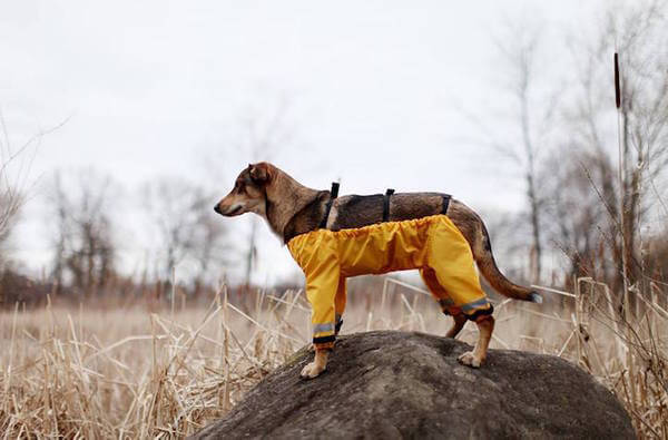 dog pants 8