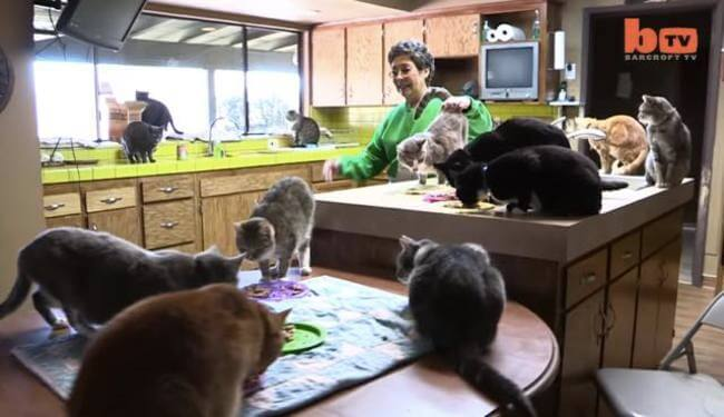 Cat Lady That Lives With 1100 Cats 2