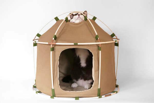 cat camping gear 2