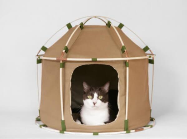 cat camping gear 23