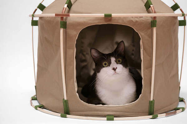 & Say Hello To Indoor Cat Camping With This Cat tent