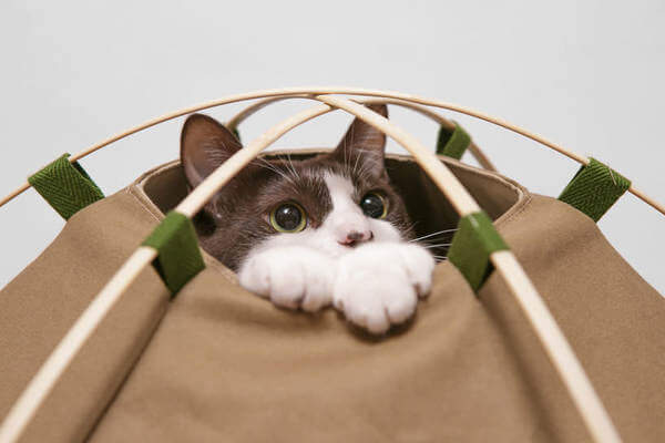cat c&ing gear 3 & Say Hello To Indoor Cat Camping With This Cat tent