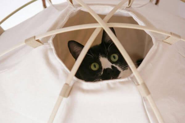 cat camping gear 5