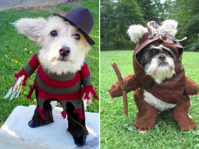 24 Animal cosplay that Are Better At halloween Than Their ...