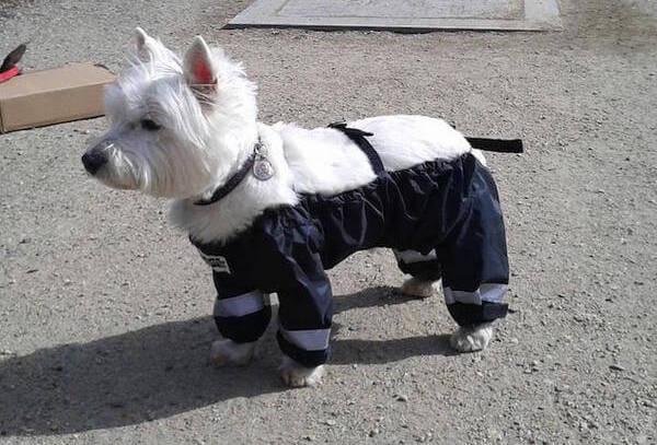 dog pants feat