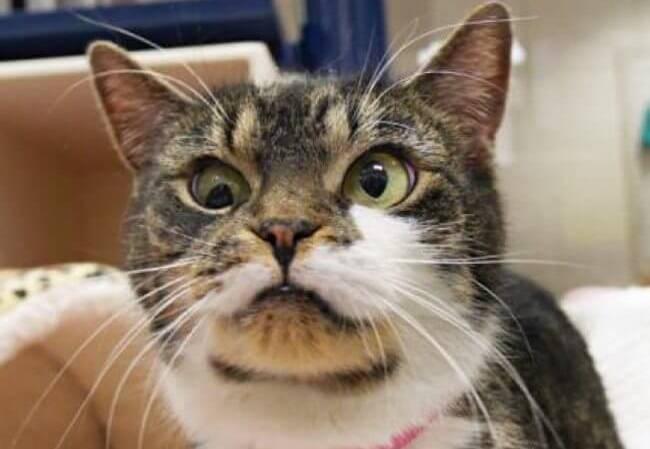 googly eyes cat