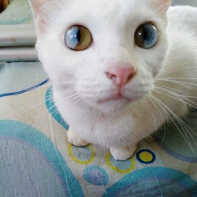 amazing cat eyes 3
