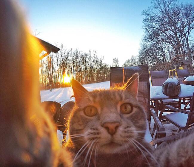 Selfie Cats 4