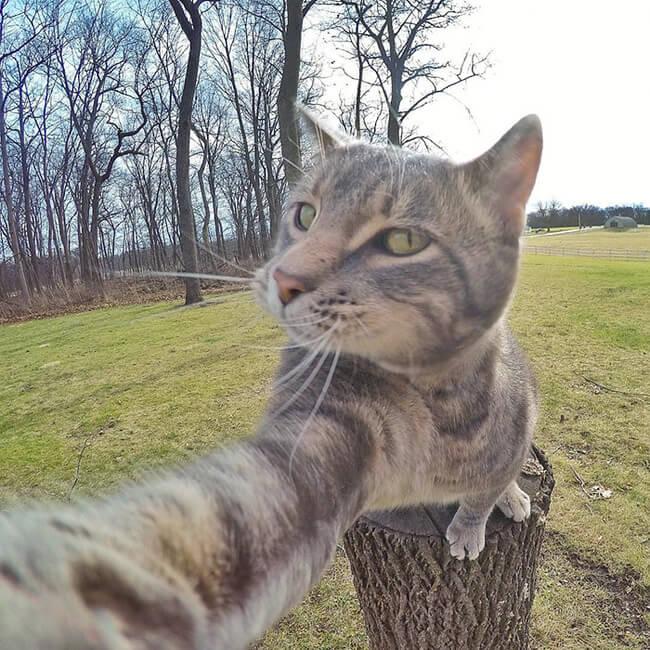 Selfie Cat 2