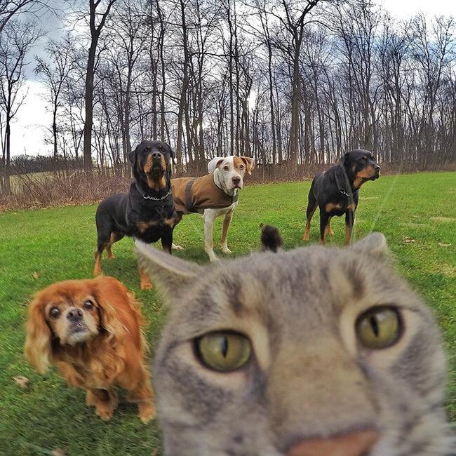 Selfie Cats 5