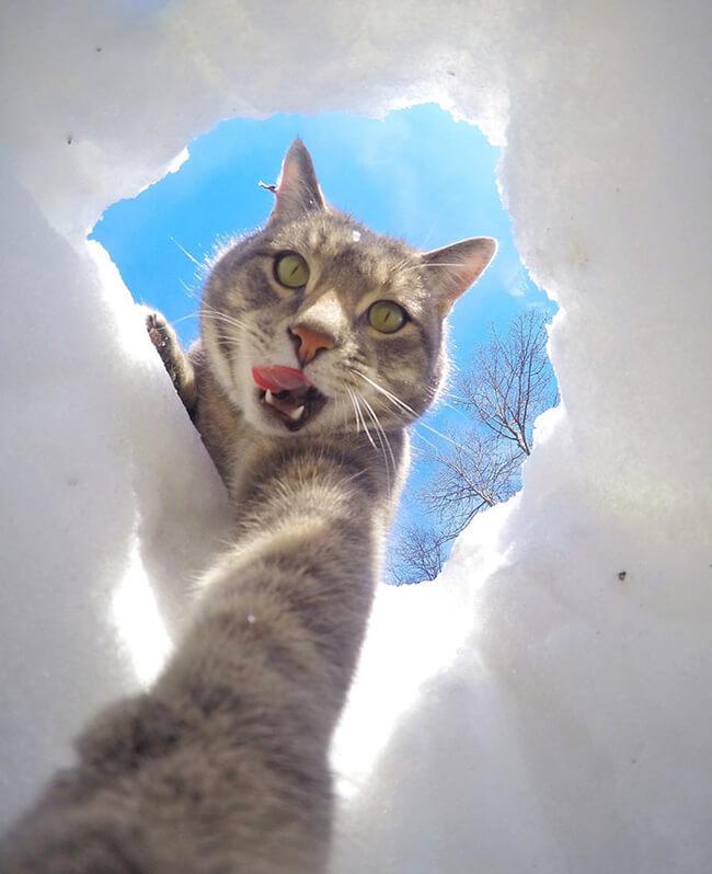 Selfie Cats 6
