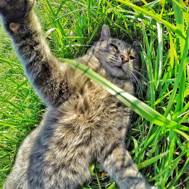 Selfie Cat 8