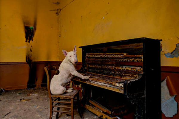 Bull terrier and human explore abandoned buildings 5