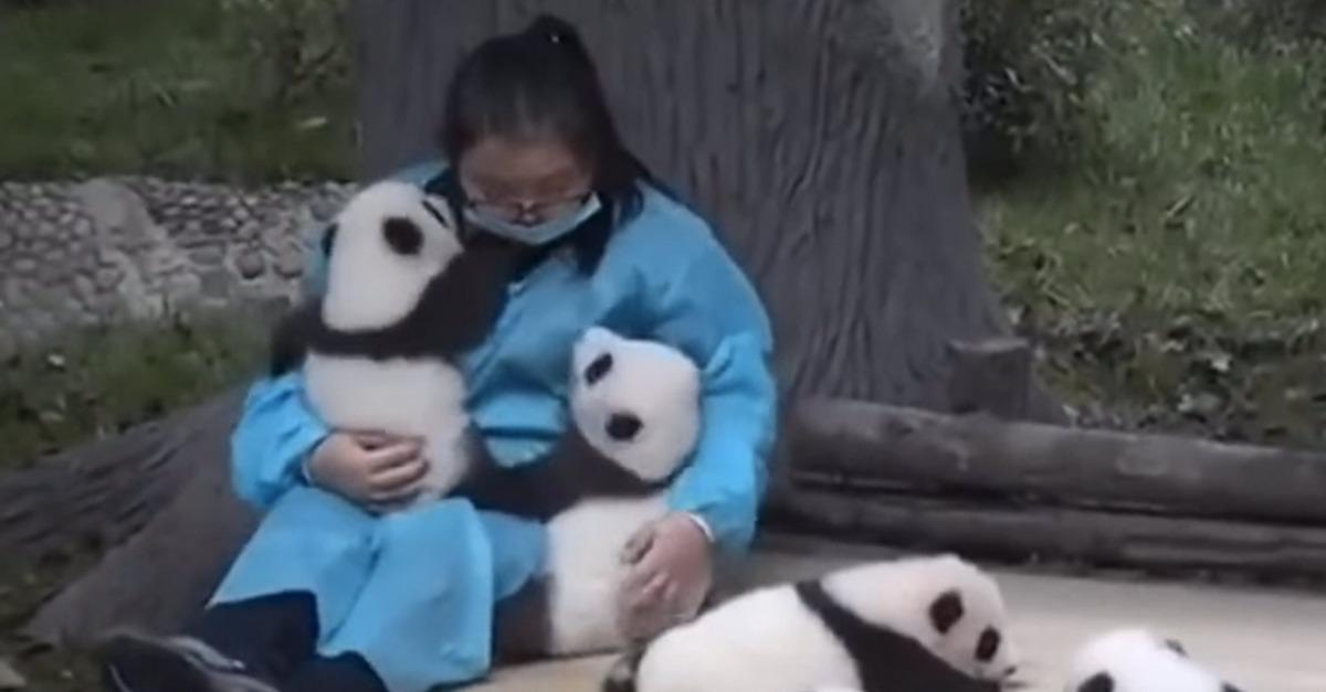 panda huggers