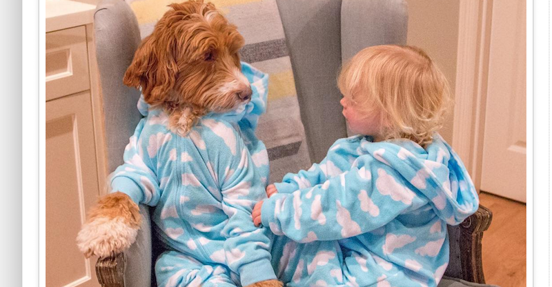 toddler and his dog