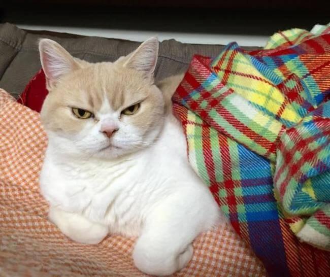 Koyuki the cat 6