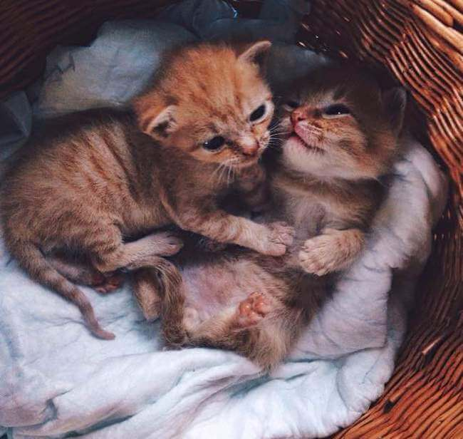 Two Ginger cats 1