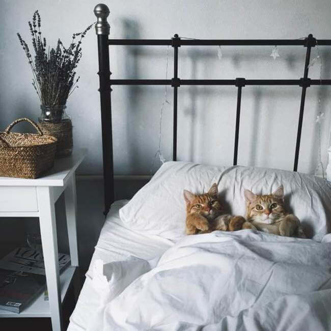 Two Ginger cat 9