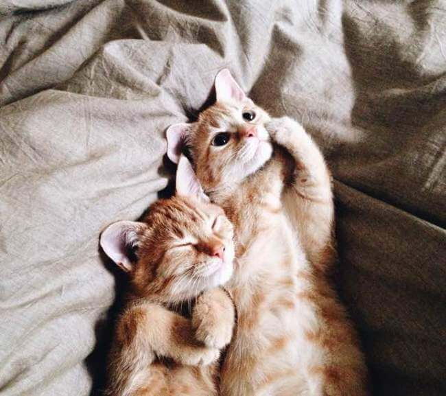 Two Ginger cats 5