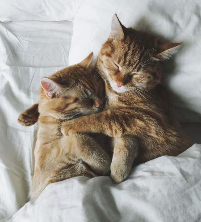 Two Ginger cats 11