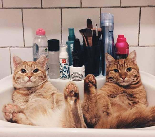 Two Ginger cat 7