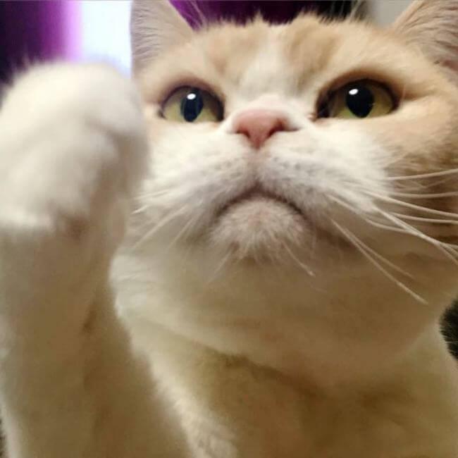 Koyuki the cat 2