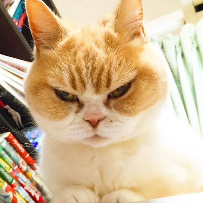 Koyuki the cat 3