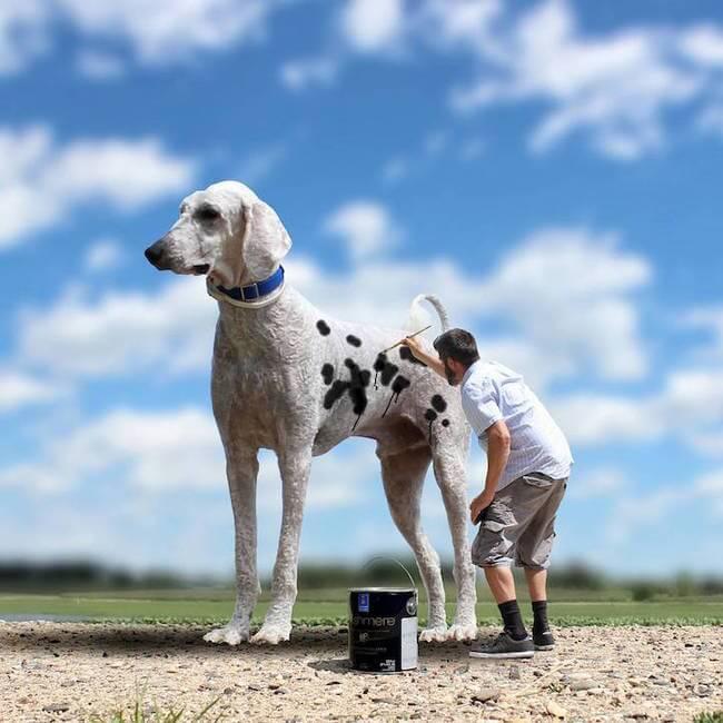christopher cline dog 7