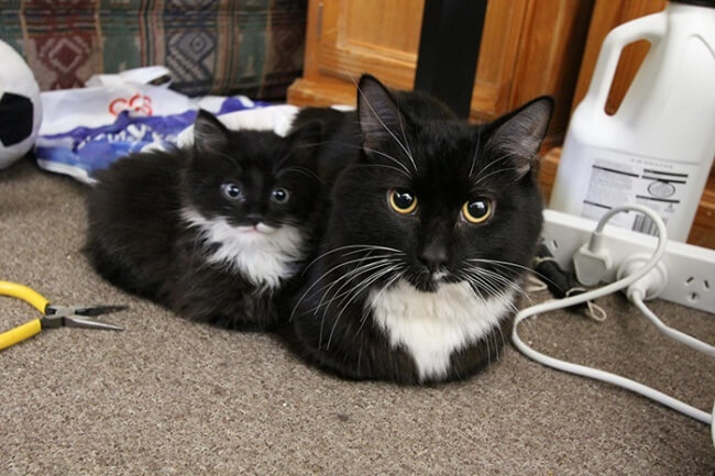 baby cats 1