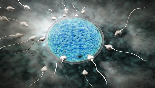 human sperm grown 1