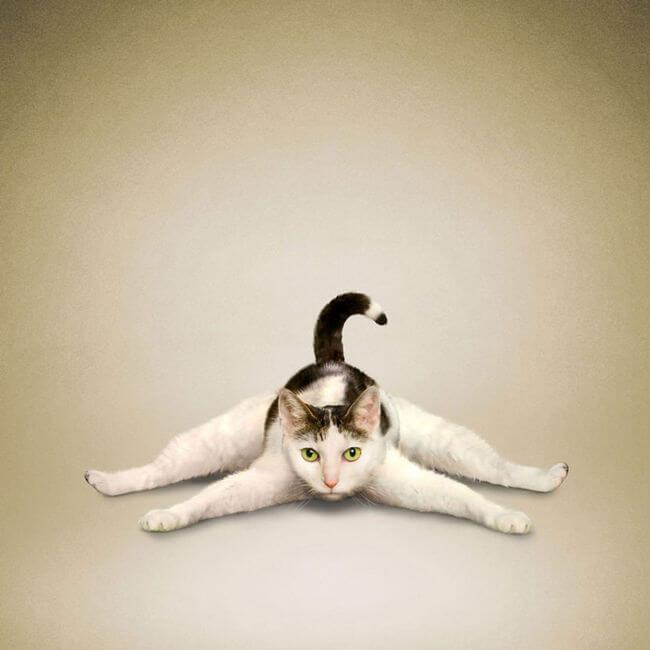animal doing yoga 7