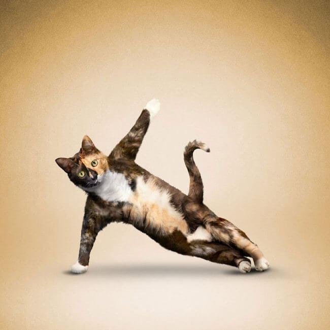 animals doing yoga 1