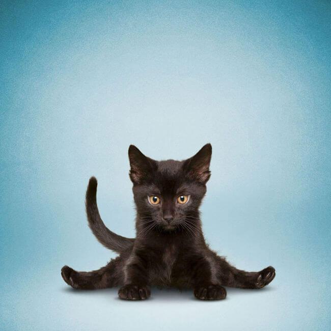 Zumba With Cat Youtube