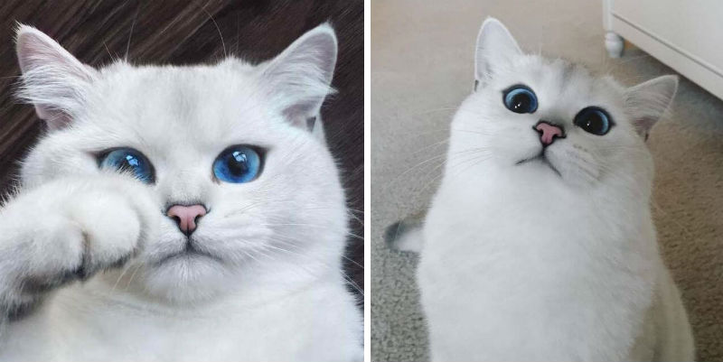 blue eyed cat feat