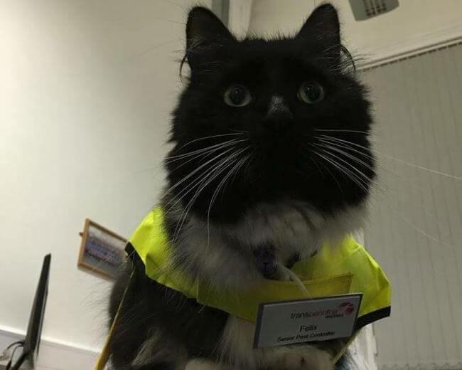 Felix The Cat 1
