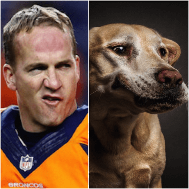 dog look like peyton 10