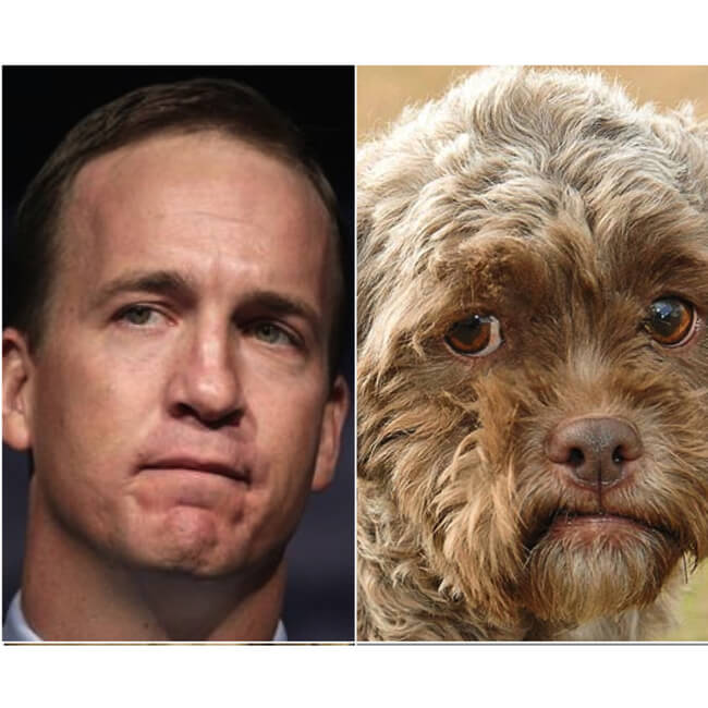 dogs look like peyton 4