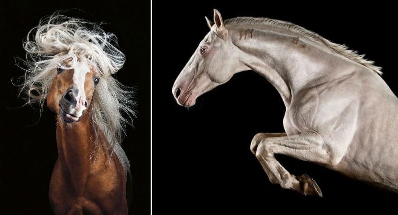 elagence of horses feat