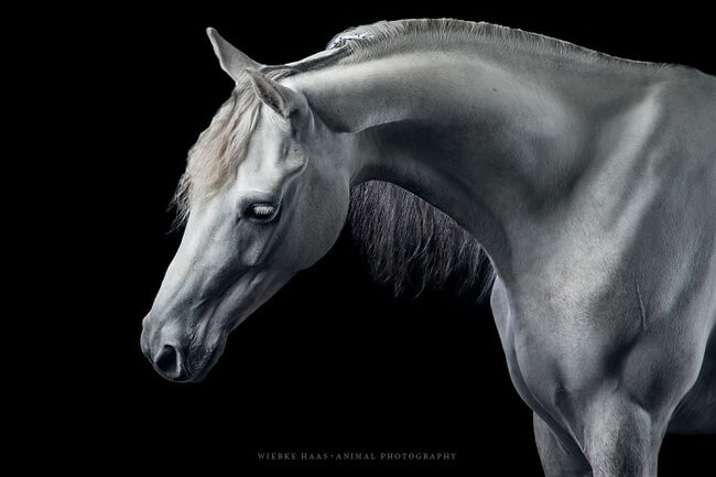 elegance of horses 5