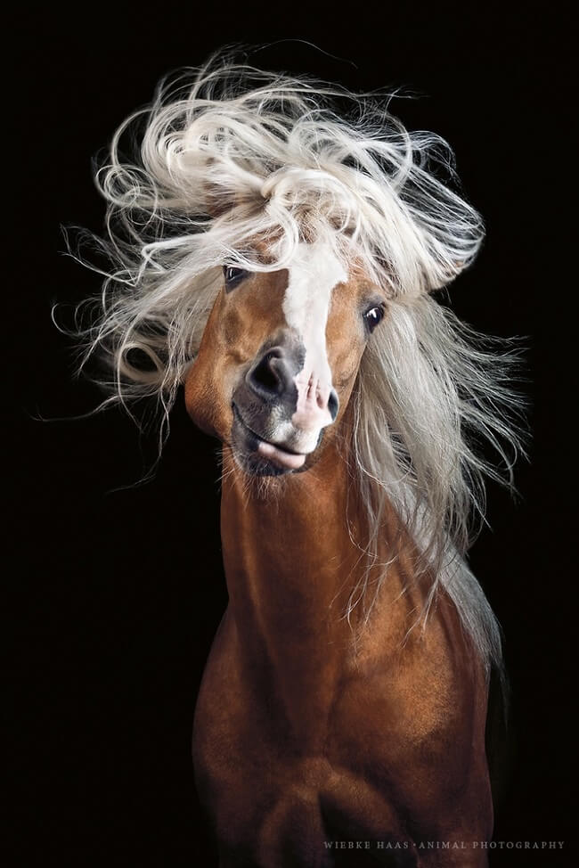 elegance of horses 1
