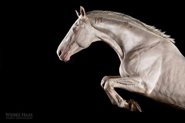 elegance of horses 13