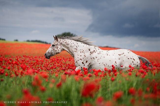 elegance of horse 14