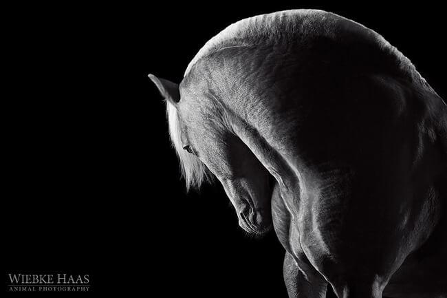 elegance of horses 16
