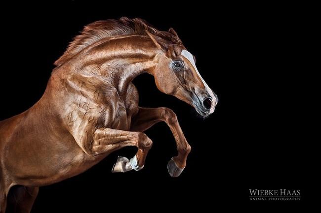 elegance of horses 15